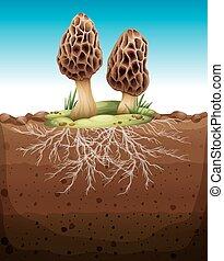 crescendo, subterrâneo, cogumelo