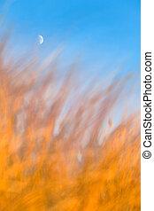 Crescent Moon Above Burning Grass