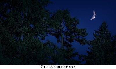 Crescent Moon Above Night Forest - Crescent moon in the...