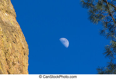 Crescent Moon and Pine at Pinnacles National Monument in California, USA.