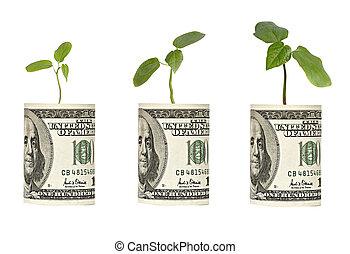 crescente, alberello, conto dollaro