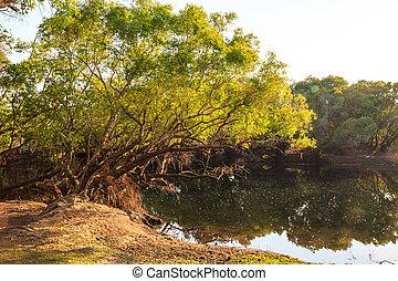 crescente, albero, lago, banca