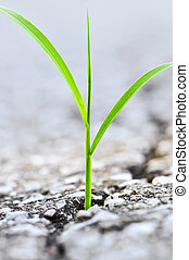 crescente, erba, asfalto, crepa