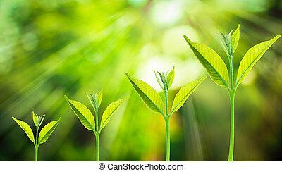 crescente, fresco, piccolo albero, natura, fondo, verde, sfocato