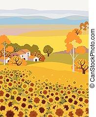 crescente, girasole, campagna, fattoria
