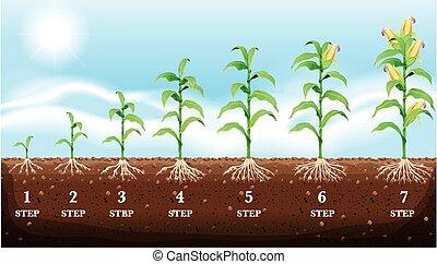 crescente, granaglie, suolo