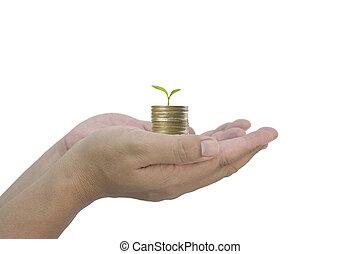 crescente, monete, albero, tenere mani