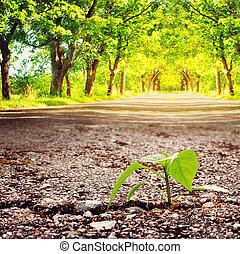 crescente, pianta, asfalto, crepa
