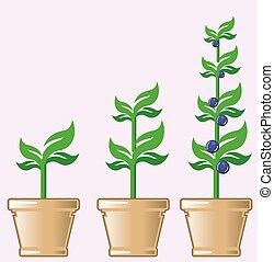 crescente, pianta, vettore, vaso, giovane