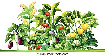 crescente, piante, verdura fresca, giardino