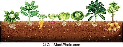crescente, sotterraneo, verdura