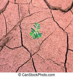 crescente, terra, fesso, albero