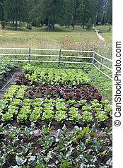 crescido, montanha, jardim, verão, legumes, campo, pé