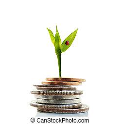 crescimento, dinheiro, novo