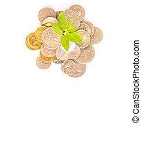 crescimento financeiro