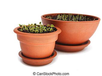 Cress in ceramic pot