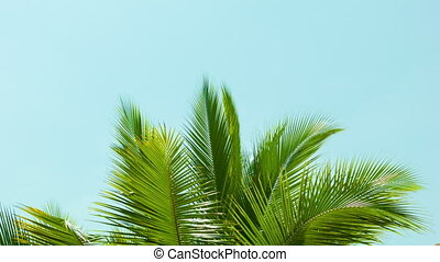 Crest of palm tree quiver in the wind against the sky