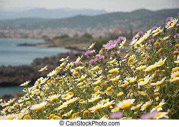 Cretan Flower Meadow in Bloom