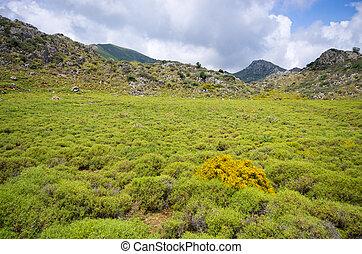 crete, 牧草地, 丘, 島, ギリシャ