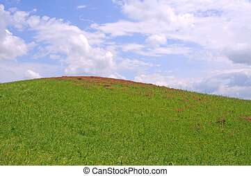 crete senesi, italy - green grass, red flowers, blue sky and...