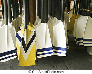 A rack of oars used for rowing crew are in the rack, ready to be pulled out for rowing. One set is colored yellow.