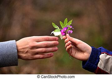 criança, mão, dar, flores, para, seu, pai