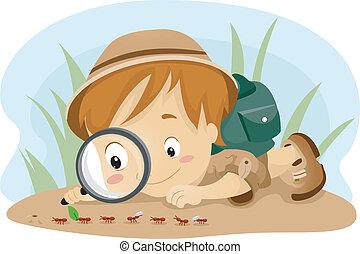 criança, observar, formigas