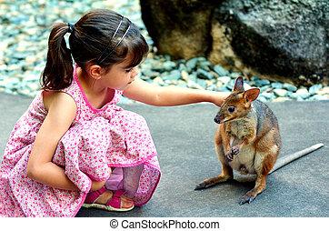 criança pequena, acariciar, um, wallaby, em, queensland,...