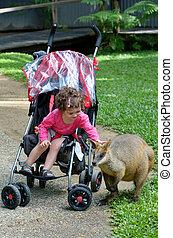 criança pequena, acariciar, wallaby, em, queensland, austrália