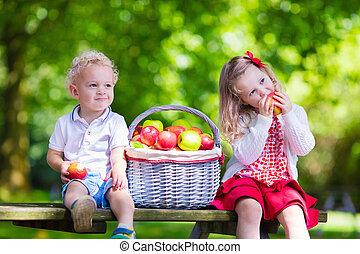 crianças, colheita, maçãs frescas