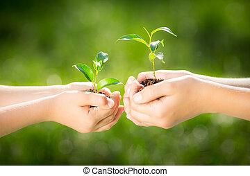 crianças, segurando, planta jovem, em, mãos