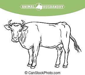 crianza, animal, blanco, vector, ganado, ilustración, ...