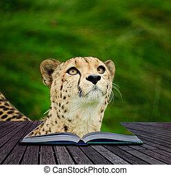 criativo, conceito, imagem, de, chita, em, páginas, de, livro