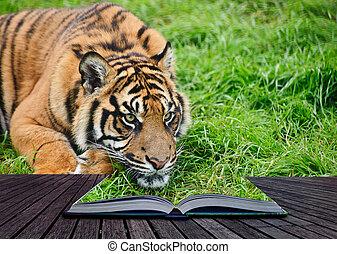 criativo, conceito, imagem, de, tiger, em, páginas, de, livro