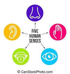 criativo, vetorial, ilustração, linha, ícone, jogo, de, cinco, human, senses., visão, ouvindo, cheiro, toque, gosto, isolado, ligado, transparente, experiência., arte, desenho, nariz, olho, mão, orelha, boca, com, língua, elemento