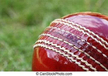 Cricket Ball Macro