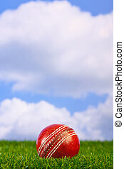 Cricket ball on grass - Photo of a cricket ball on grass...