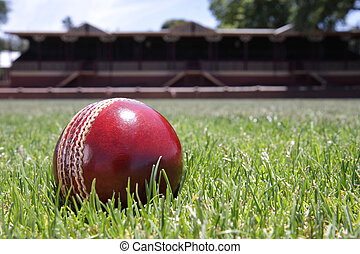 Cricket ball. - Shiny new cricket ball on grass in front of...