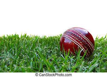 Cricket Ball - Cricket ball on grass, with white background....