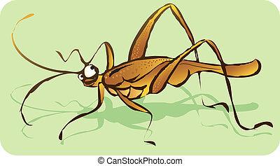 Cricket - Illustration of a cricket
