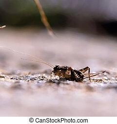 cricket on the hunt at night macro