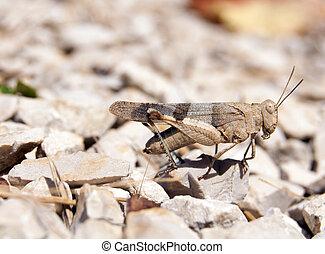 cricket between the stones
