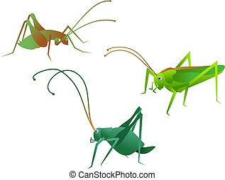 crickets - insects