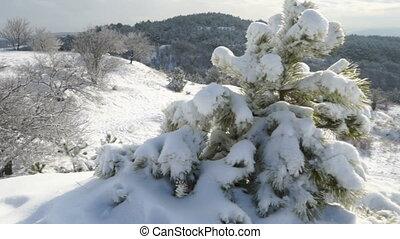 Crimean winter mountain landscape. Small pine tree on snow...