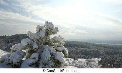 Crimean winter mountain landscape. Small pine tree on snow covered hill