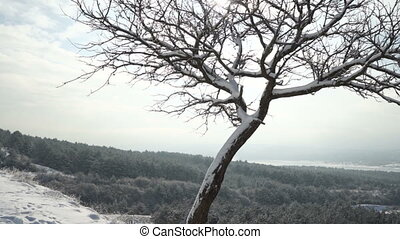 Crimean winter mountain landscape. Snow covered tree trunk on a hill in Crimea