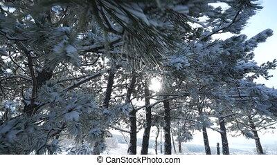 Crimean winter mountain landscape. Sun shining through snow...