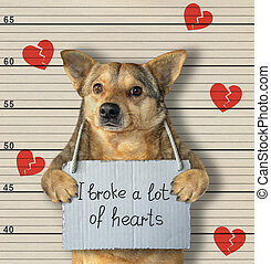 crimineel, breuken, dog, hartjes