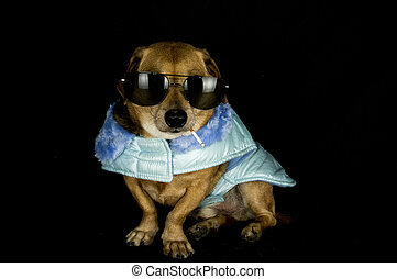 crimineel, dog
