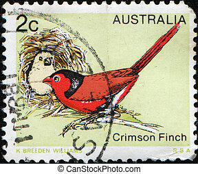 AUSTRALIA - CIRCA 1979: A stamp printed by Australia shows Crimson Finch - Neochmia phaeton, circa 1979